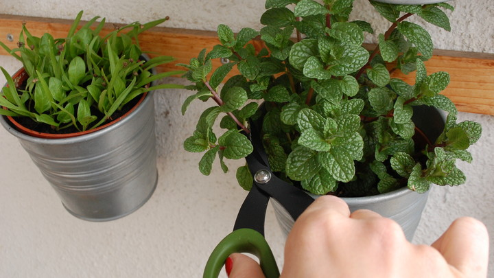Rozmnožte si bylinky