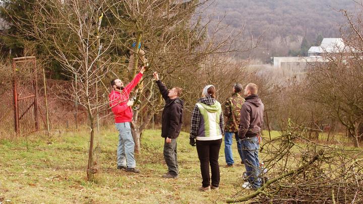 cutting fruit trees