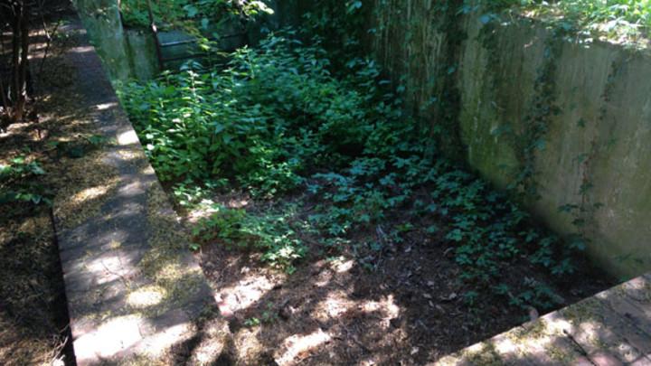 Kochova záhrada