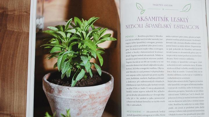 Tip na knihu: Pestujeme bylinky v byte