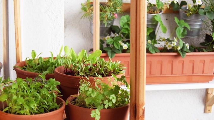 Aprílová záhradka