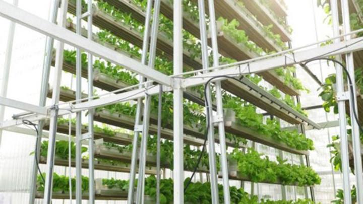 Inovatívne prístupy k pestovaniu v meste