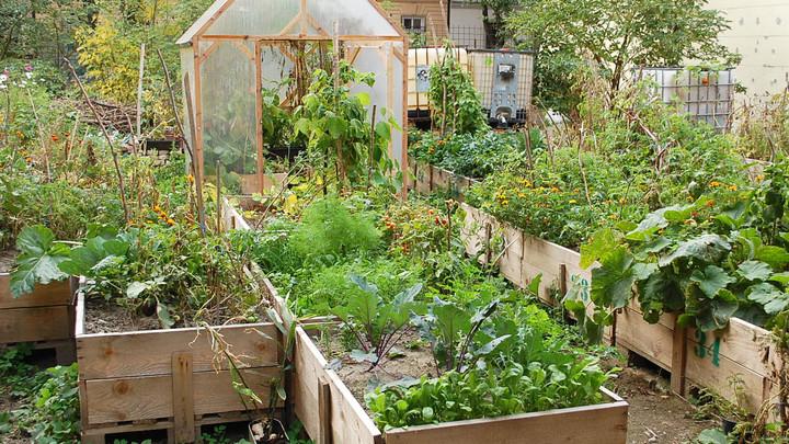 Mobilná záhrada Sasinkova 21