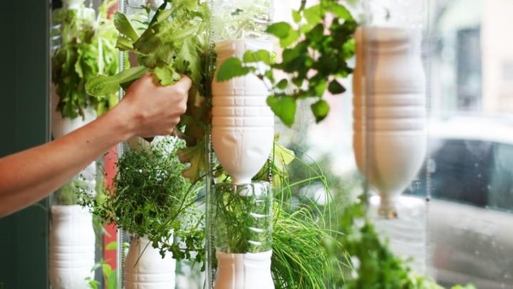 Nemáte balkón a predsa chcete pestovať? Vyskúšajte windowfarming
