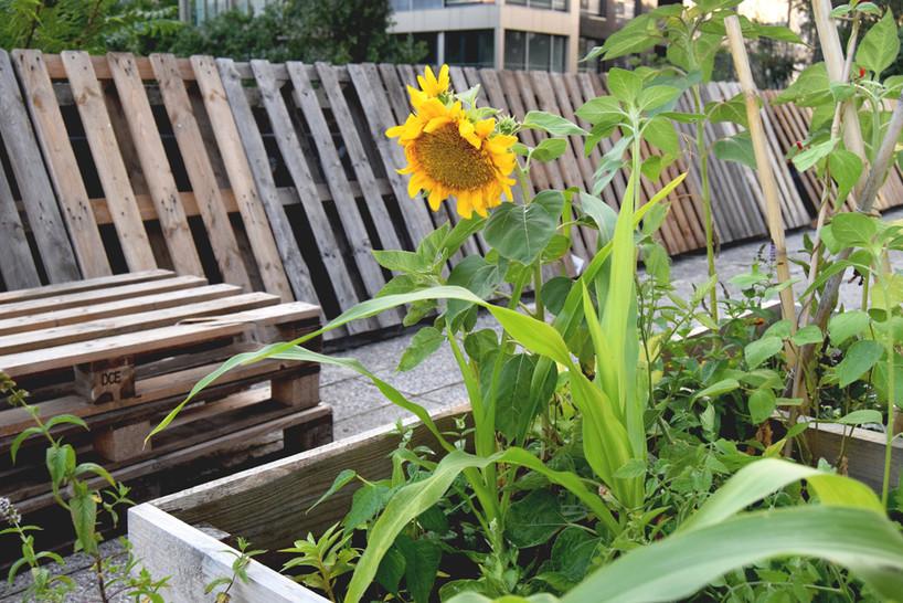 Community gardening in Bratislava