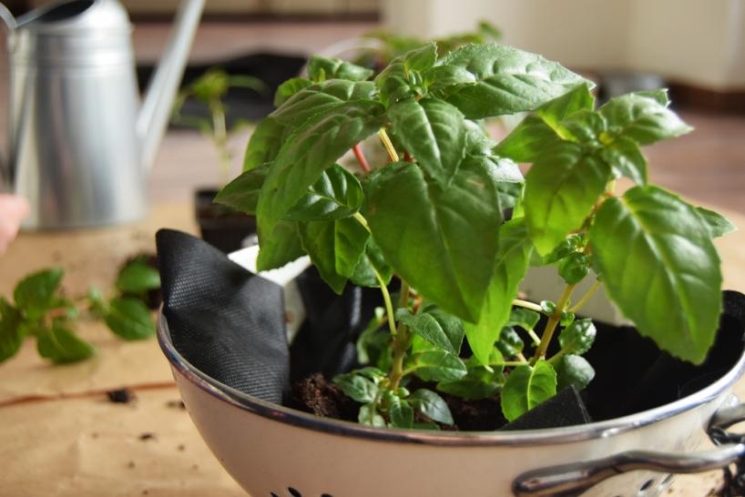 strainer planter