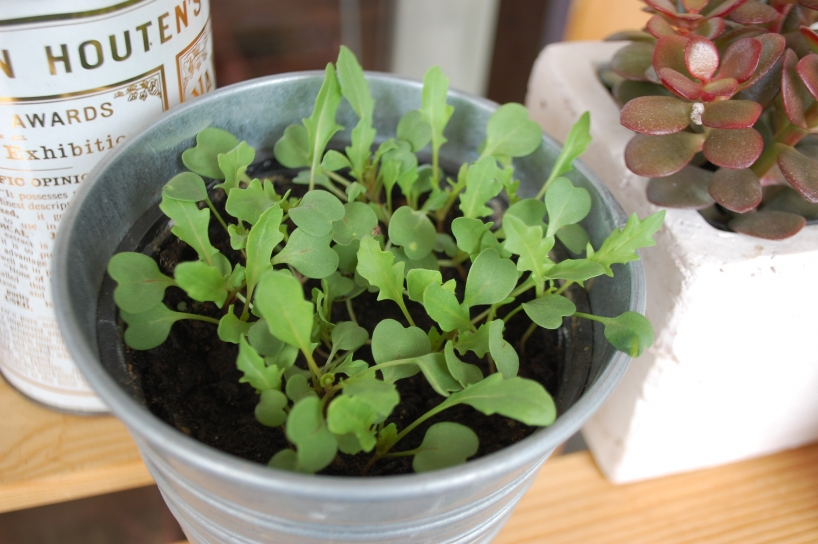 Rocket growing in a small container