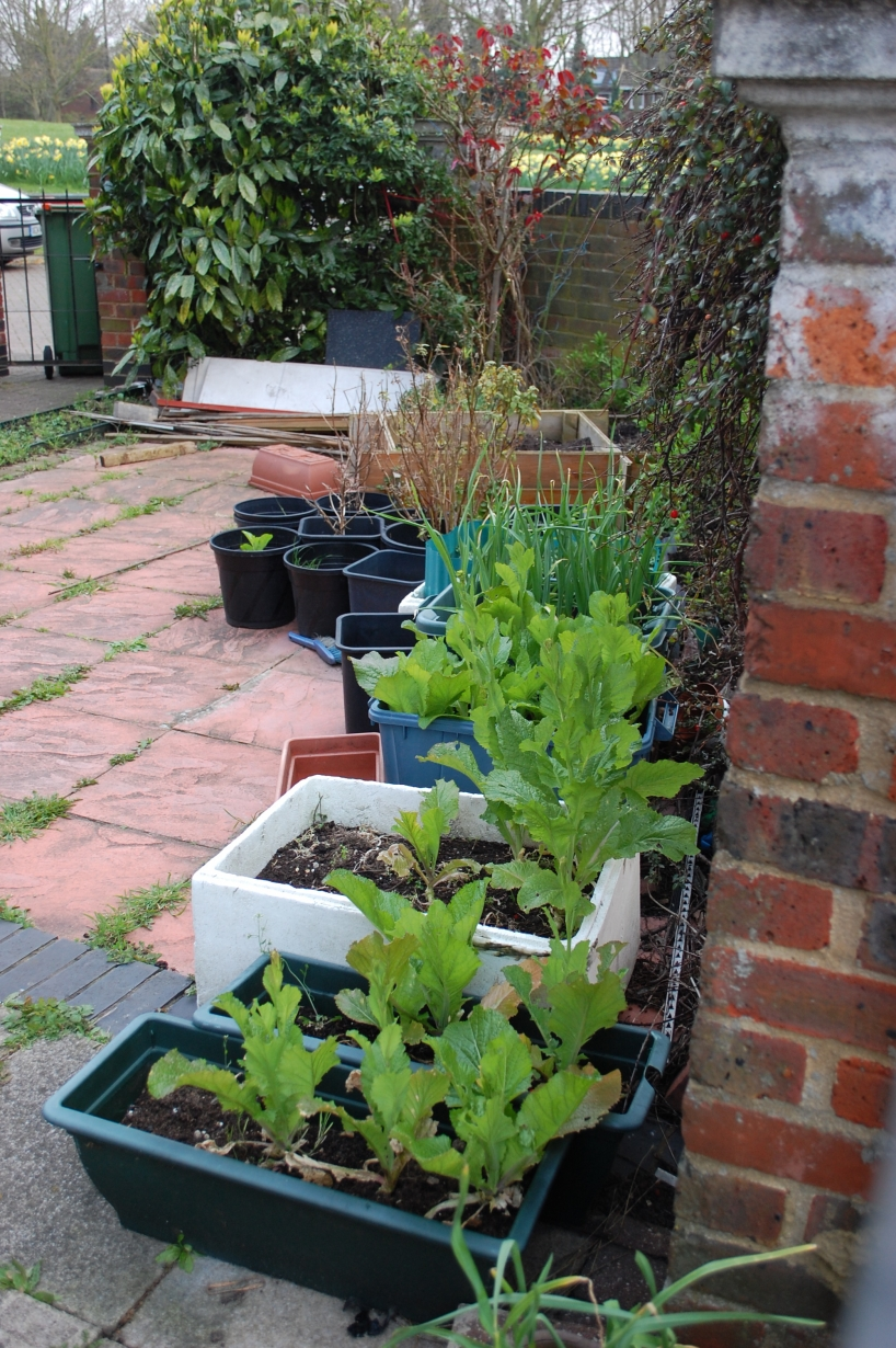 Urban gardening in London